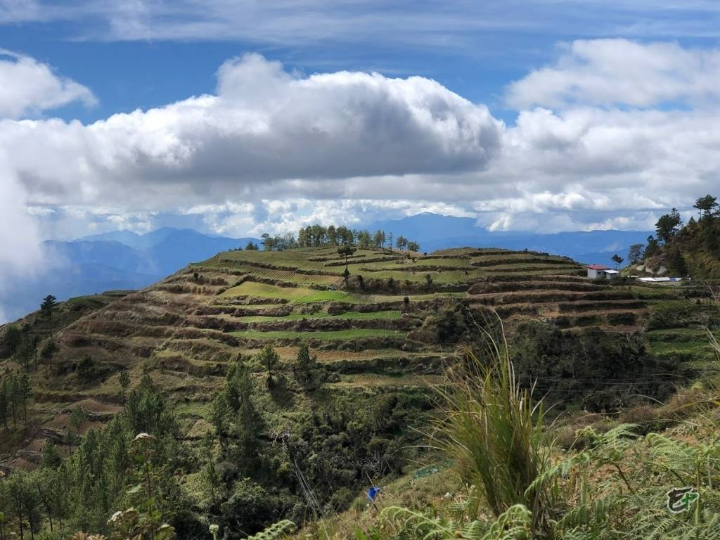 Cultivated Hillside Mount Pulag