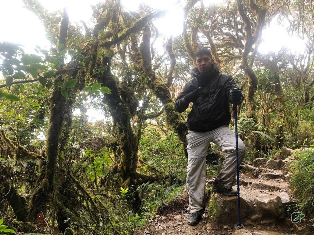 Mossy Forest, Mount Pulag