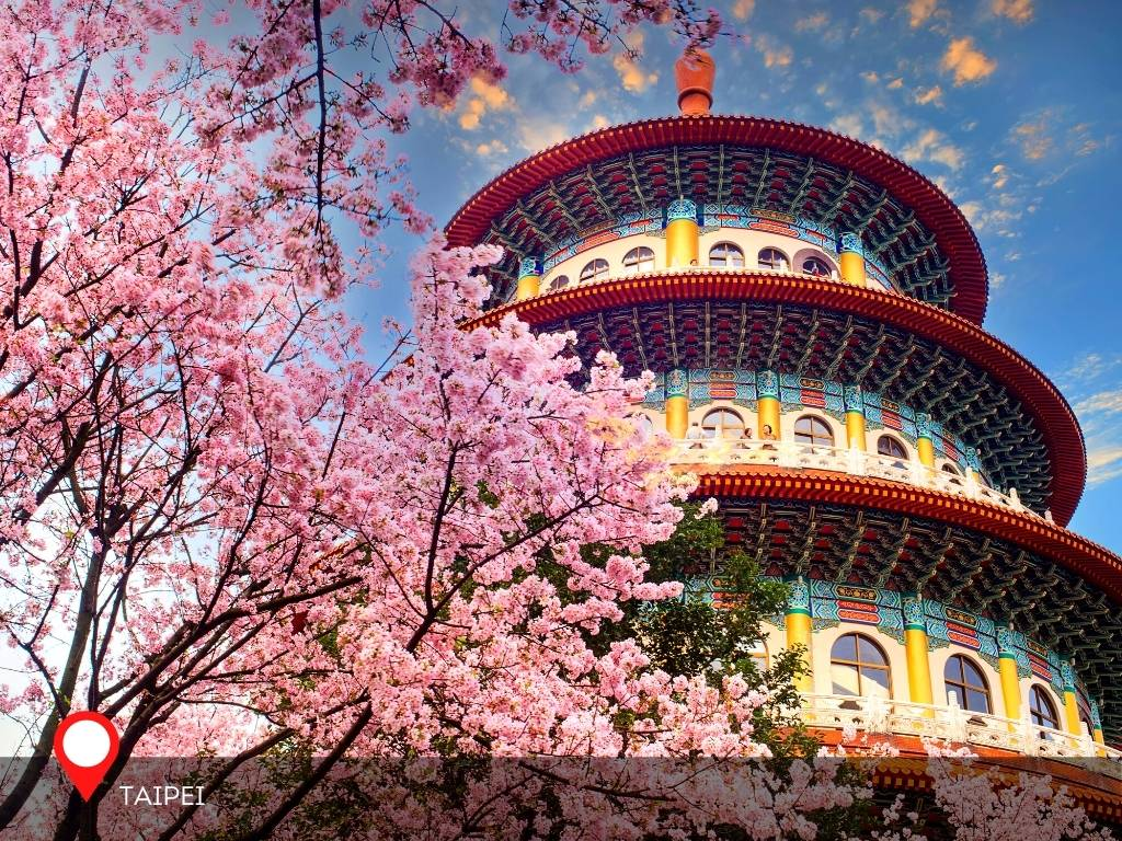 Cherry Blossoms, Tianyuan Temple, Taiwan